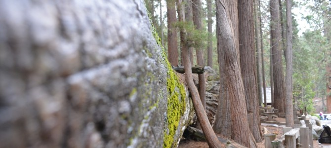 Sequoia & Kings Canyon Nationalpark